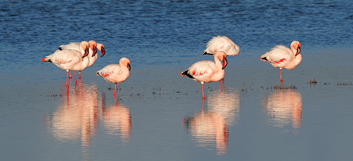Astaxanthin – Pink & Red Carotenoid