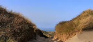 Braunton Burrows: Sand Dunes and Saunton Beach