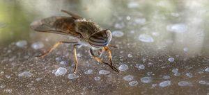 DEET – Insect Repellent