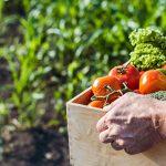 UN Climate Conferences 2021: Plant-based Diets
